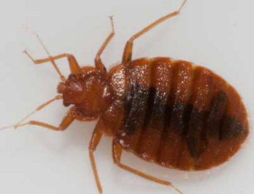 DON'T EVEN LET THAT BED BUG INFESTATION START!